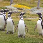 Es posible recuperar una web de Google Penguin?