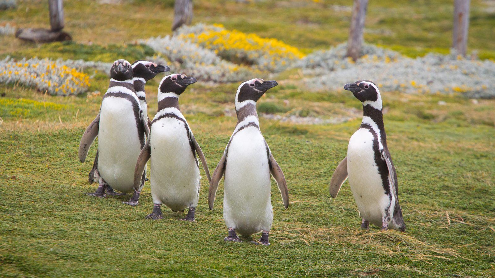 Recuperar de Google Penguin