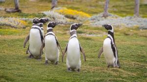 Salir de Google Penguin